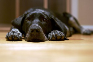 Tips for dealing with a black dog day