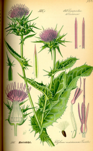 National Herbal Medicine Week