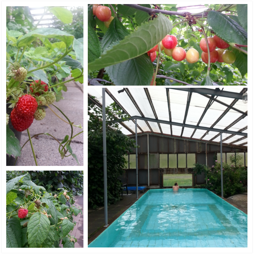 greenhouse pool