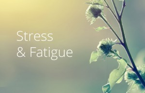 Stress & Fatigue