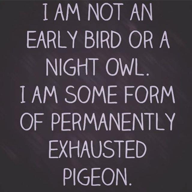 permanently-exhausted-pigeon